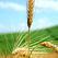Представлен законопроект о сельскохозяйственном страховании