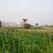 Куба откроет первую электростанцию на сахарном тростнике