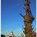 Памятник Петру Первому в Москве останется на месте