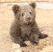 """Уфимский сайт """"Из рук в руки"""" разместил объявление о продаже самцов бурых медвежат"""