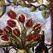 """В Нью-Йорке продан """"Натюрморт с тюльпанами"""" Пикассо"""