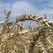Башкирским аграриям поможет Общественный совет
