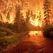 В Хайбуллинском районе Башкортостана сгорело 10 га леса