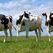 На поддержку сельского хозяйства РФ будет направлено 35,7 млрд рублей