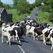 Эстонские фермеры требуют возместить убытки из-за продовольственного эмбарго России