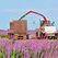 Российское правительство дополнительно выделило на растениеводство 3,8 млрд руб