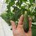 В Новосибирске намерены возвести тепличный комплекс для производства овощей