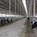 В Белгородской области построят молочный комплекс мощностью 45 тыс. тонн молока в год
