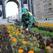 На озеленение одного из городов Башкирии выделят более 500 тысяч рублей