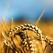 В Башкирии засеяли уже 40 тысяч гектаров земли
