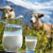 Тайские инвесторы вложатся в строительство молочного комплекса в Московской области