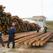 В Башкирии на 37% выросли объемы обработки древесины