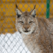 В Уфе могут построить новый зоопарк