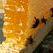 Молочное коневодство и производство меда в Башкирии будет субсидироваться из двух бюджетов