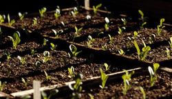 В Башкирии необходимо увеличить плодородность почв