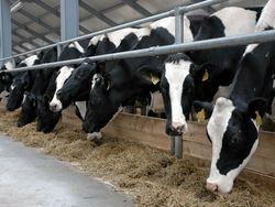 500 башкирских ферм ждет модернизация
