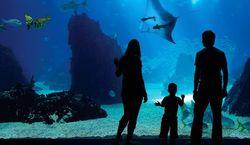 В Сингапуре откроют крупнейший в мире океанариум