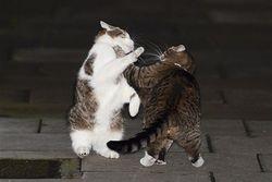 В Великобритании подрались коты премьера и главы Минфина страны