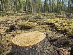 Башкирия планирует увеличить объемы заготовки древесины до 4,5 млн. куб. м.