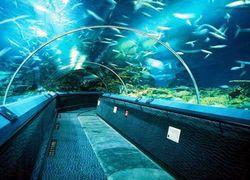 В Петербурге через три года появится крупный океанариум