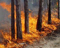 башкортостан, пожары