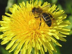 В США 20 млн медоносных пчел оказались на свободе