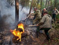 Почти треть лесных пожаров в Башкирии произошли по вине людей