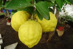 Уфимский лимонарий – золотой призер на международном конкурсе качества