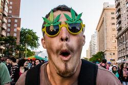 По итогам референдума в Вашингтоне легализуют хранение марихуаны
