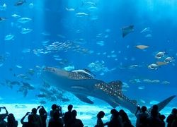 В Санкт-Петербурге в Купчино за 3,5 млрд рублей построят океанариум