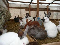 В Братске появится ферма по производству кроличьего мяса