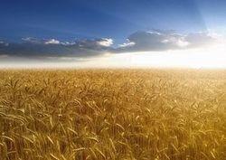Россия готова экспортировать в декабре зерно в КНР