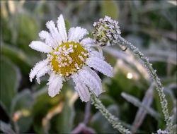В Башкирии синоптики в ближайшие ночи прогнозируют заморозки