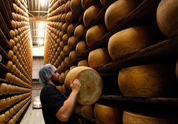 В Башкирии планируется производство элитных сыров
