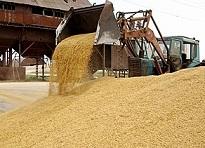 Ткачев: показатели по урожаю зерна в текущем году хорошие