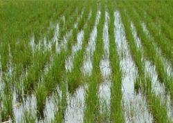 1 млрд рублей выделен правительством РФ на поддержку растениеводства