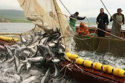 Россия вдвое планируют увеличить производство рыбы к 2020 году