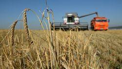 пшеница китай карантин