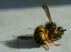 Так вот почему пчелы вымирают!