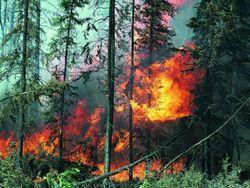 Башкирия вошла в список пожароопасных регионов