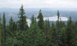 Минлесхозу Башкирии в 2012 г. будет выделено 409,6 млн. рублей