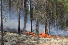 лесные пожары ликвидировали